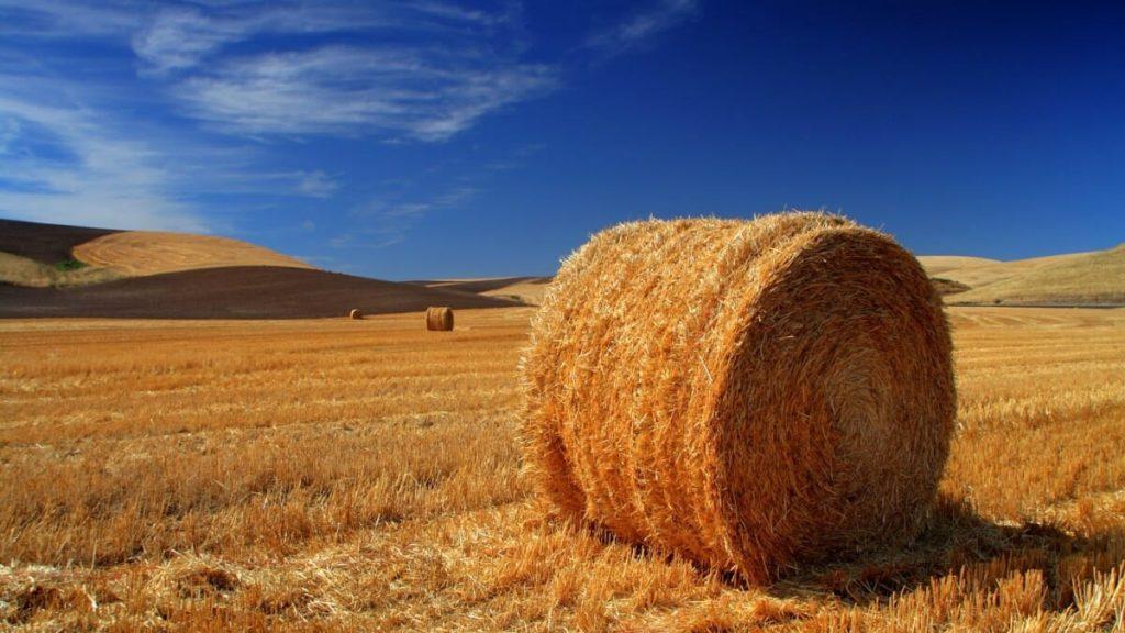 ESENZIONE IMU TERRENI AGRICOLI: COADIUVANTI