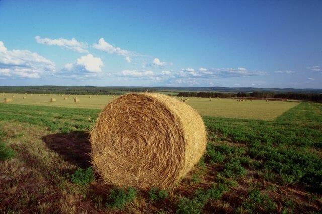 LA TASSAZIONE DEI TERRENI AGRICOLI: EVOLUZIONE NORMATIVA